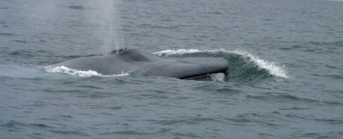 bluewhale-front071404